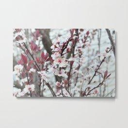 Blooming Plum Tree Metal Print