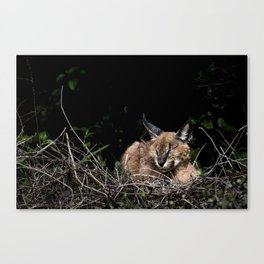 Napping Cat Canvas Print