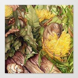 Honey Possum in Dryandra Canvas Print