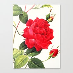 IX. Vintage Flowers Botanical Print by Pierre-Joseph Redouté - Red Rose Canvas Print