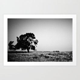 Field Of Empty Dreams Art Print