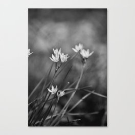 Black & White Wildflowers Canvas Print