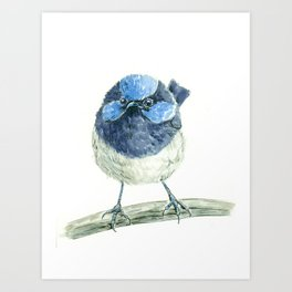 Fairy wren bird  Art Print
