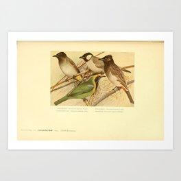 Black fronted Bulbul Golden fronted Leafbird otocompsa leucotis pycnonotus pygaeus11 Art Print
