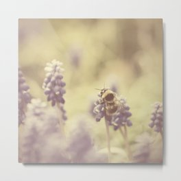 busy buzzy bumble bee ... Metal Print