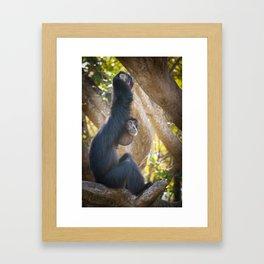 Gibbon 5 - Just Chillin Framed Art Print