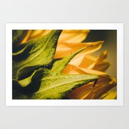 Sunflower (2) Art Print