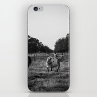 cows iPhone & iPod Skins featuring Cows by No Title Photography by April