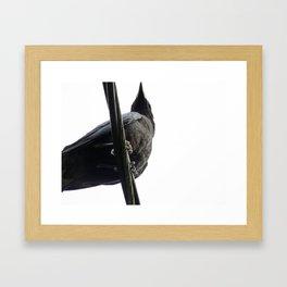 Crow on White Framed Art Print
