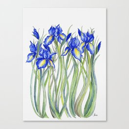 Blue Iris, Illustration Canvas Print