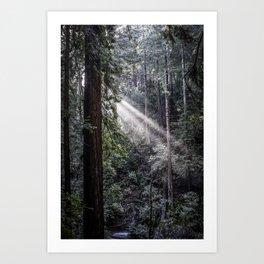 Muir Woods Crepuscular Rays Art Print