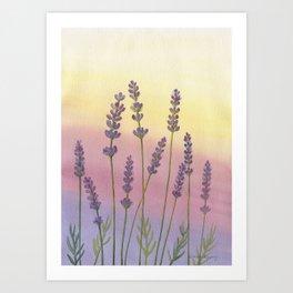 Lavender in Sunset Art Print