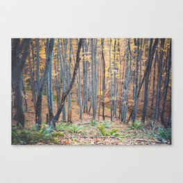 Dreamy forest No4 Canvas Print