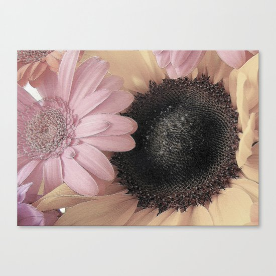 Daisy Sings the Pinks Canvas Print