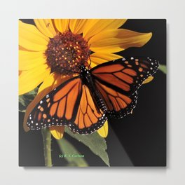 Monarch on a Desert Sunflower Metal Print
