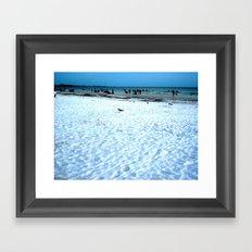 Lost Seagull Framed Art Print
