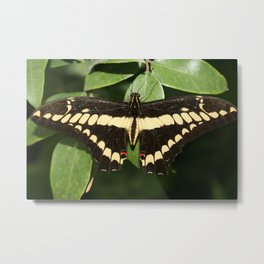 Yellow and Black Butterfly on a Leaf Metal Print