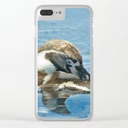 Humboldt penguin (Spheniscus humboldti) Clear iPhone Case
