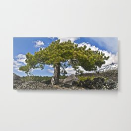 Pine Tree on the Ground of the Mount Etna Metal Print