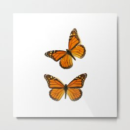 Monarch Butterflies... Metal Print