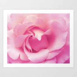 Soft pink rose Art Print