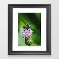 Bee and a flower Framed Art Print