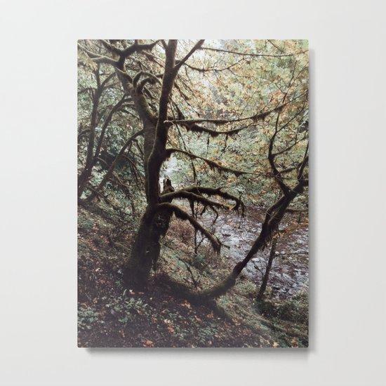 Bit of Moss Metal Print