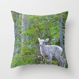 Big horn sheep lamb in Jasper National Park Throw Pillow