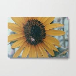 Sunflowers need love too Metal Print