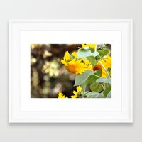 sunflowers Framed Art Prints featuring SUNFLOWERS :) by Teresa Chipperfield Studios