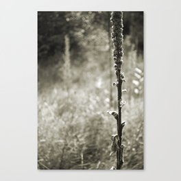 Autumn Sepia Canvas Print