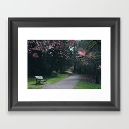 bench and blossoms Framed Art Print