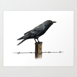Country Crow Art Print