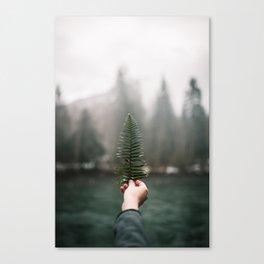 Northwest Fern Canvas Print