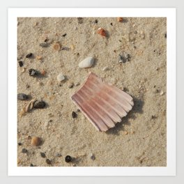 Shells in the Sand Art Print