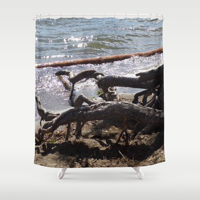 Roots of Huge Old Pine Tree Reaching Into The Lake Shower Curtain
