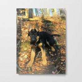 A beautiful German Shepherd in the forest Metal Print