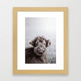 HIGHLAND CATTLE CALF ALF Framed Art Print