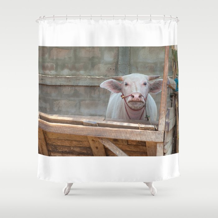 The Albino Buffalo Shower Curtain By Marcelderweduwen