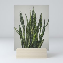 Succulent Sansevieria Snake Plant Painting Mini Art Print