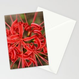 Lycrois Flower Stationery Cards
