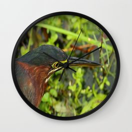 Green Heron Portrait Wall Clock