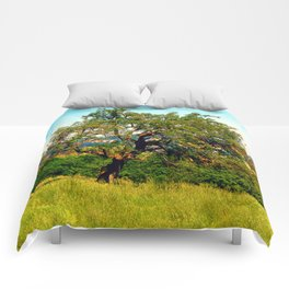 Yet another old tree Comforters