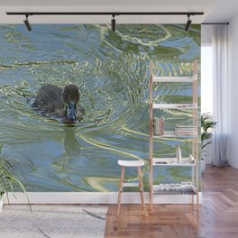 Little Black Duckling Swimming Wall Mural