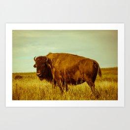 Vintage Bison - Buffalo on the Oklahoma Prairie Art Print