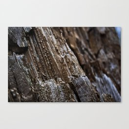 Rotted Canvas Print