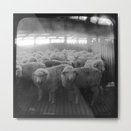 The Holding Pen - Through The Viewfinder (TTV) Metal Print