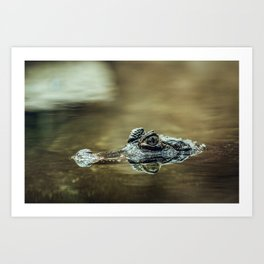 Cocodrile eyes Art Print
