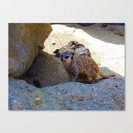 Meerkat saying Hello Canvas Print