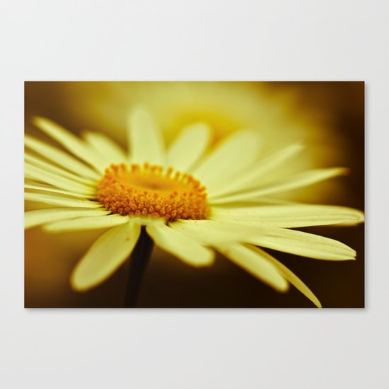 Delight Canvas Print